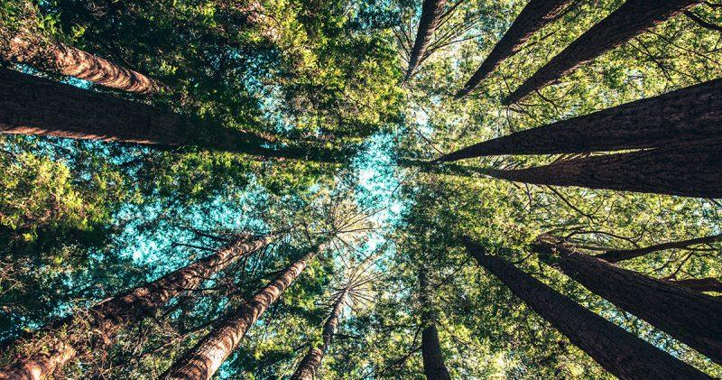 心地よい森